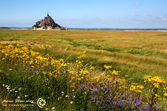 MONT-SAINT-MICHEL 45 (filippi antonio) Tags: flowers france verde green field grass fleurs landscape vert erba normandie fiori normandy francia paesaggio montsaintmichel normandia prssals prati