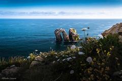 _DSC8810 (allabar8769) Tags: flores mar puerta playa paisaje amanecer rocas cantabria liencres losurros