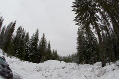 Outside of Trillium Lake (sleepingincircles) Tags: trees winter snow oregon portland treetops evergreen mthood graysky trilliumlake timberlinelodge