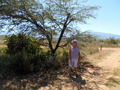 Posing under a Thorn Tree (RobW_) Tags: africa park tree south national tuesday february thorn westerncape swellendam overberg bontebok ritsa 2016 23feb2016