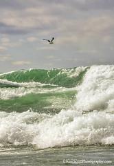 Lake Michigan ... 'wind surfer' (Ken Scott) Tags: winter usa march michigan seagull wave blow lakemichigan greatlakes breaker freshwater voted leelanau 2016 45thparallel fhdr sbdnl sleepingbeardunenationallakeshore mostbeautifulplaceinamerica