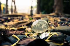 -Crystal ball in fall (AllenPan02) Tags: autumn tree hongkong leaf warm close crystal sony