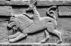 Chimera (mysunsin) Tags: gargoyle chimera grotesque
