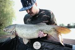 12.30kg carp