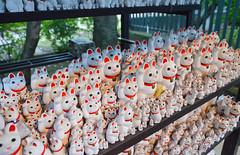 cats, cats, cats! (when I'm on vacation) Tags: cats japan cat temple japanese tokyo shrine neko manekineko maneki gotokuji