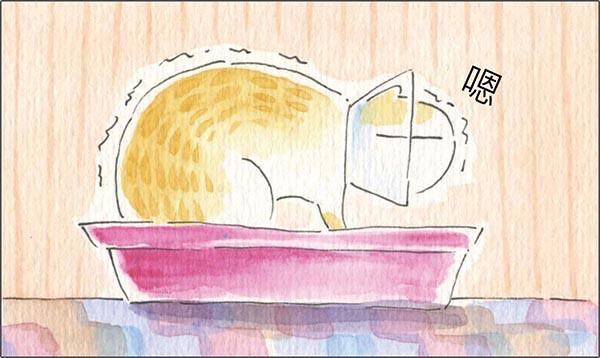 家裡來了一隻貓 貓的羞恥心