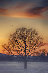 Fading Day (flashfix) Tags: light sunset orange seagulls mist ontario canada tree nature field birds spring nikon dusk ottawa silhouettes blues mothernature pinks 2016 oramge d7000 nikond7000 55mm300mm 2016inphotos april142016