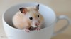 Mug Shot In Window Light (disgruntledbaker1) Tags: hamsters disgruntledbaker
