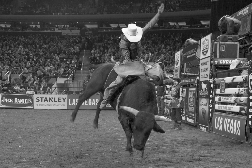 The World 39 S Best Photos Of Bull And Riders Flickr Hive Mind