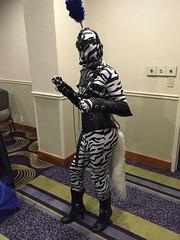 Zebra Pony- Before the Party - 2 (AgentDrow) Tags: sexy tail bondage bdsm corset zentai ponyplay