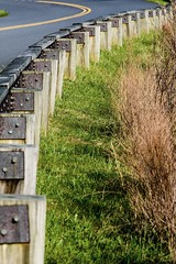 Guard Duty (rstutts44) Tags: linvillegorge blueridgeparkway smokymountains pisgahnationalforest