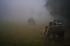 IMGP1296 (mouryach) Tags: nepal chitwan sarangkot