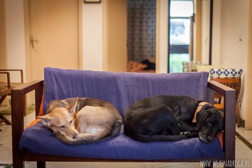 Coco i Chanel, psy naszych hostów