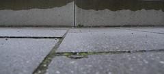 im Hintergrund konnte er jetzt schon ganz deutlich das Panorama der bayrischen Alpen erkennen. Am Ende der Voralpenebene zeichneten sich die ersten Hgel und Gerllfelder ab (raumoberbayern) Tags: panorama abstract mountains alps munich mnchen berge alpen robbbilder urbanfragments gehsteig