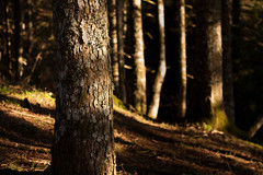 forest korp (zampination) Tags: forest canon 50mm f18 enchanted 450d