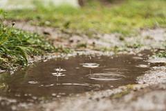 (deadlybouquet13) Tags: oklahoma nature leaves rain weather nikon minolta teenager