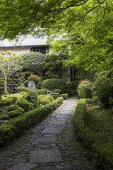 Shinryoku  (PV9007 Photography) Tags: new green japan temple spring kyoto  april  kansai frhling  anrakuji  sakyoku  2016  ahorn   shinryoku