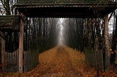 alley (MarcelXYZ) Tags: autumn trees mist leaves canon alley gate drohiczyn cesarz marcelxyz
