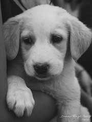 Little puppy (Dreams through Reality) Tags: portrait blackandwhite bw cute dogs animals puppy small lumixgvario14140f3556 olympusem10