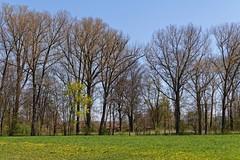 Bad Windsheim - Frhling 2016 (M. Franziska D.) Tags: natur pflanzen bume katzen frhling blten weiher badwindsheim