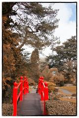 IMG_6824-Edit-Edit-Edit (Habitualmurph) Tags: ireland spring japanesegardens kildare canon70d