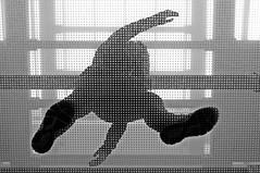 dancing on the glass floor :-)))) (eggii) Tags: glassfloor