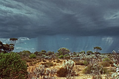 Oncoming storm in the Nullabor (Stefan Ulrich Fischer) Tags: travel abandoned 35mm landscape nationalpark outdoor oz australia scanned outback analogue westernaustralia downunder nullabor olympusmju2