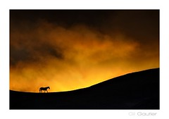 ... (Gil Gautier @GilGPhotographie) Tags: sunset horse cheval nikon vercors gilgphotographie gilgautier