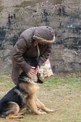 Amore (DanielOssino_EducatoreCinofilo) Tags: dog cute love dogs cane puppy shepherd cutie class dolce german germanshepherd amore cucciolo cani pastore cuccioli tedesco puppyclass tenero pastoretedesco