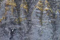 Dall's Sheep, aerial photo, Gates of the Arctic National Park, AK (Jared Hughey) Tags: wild bird nature animal alaska wildlife science research fieldwork arcticcircle brooksrange songbird gatesofthearcticnationalpark