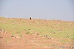 3-Oman-Desert-Marathon-Day-4_5961