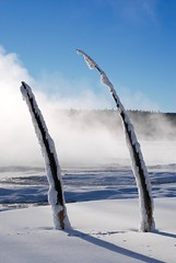 Sticks (siman.jack) Tags: trees nature forest dead sticks pair yellowstone wyoming parallel