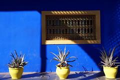Jardin Majorelle, Marrakech (mattk1979) Tags: blue cactus house architecture garden northafrica morocco marrakech plantpot yvessaintlaurent gueliz jardinmajorelle