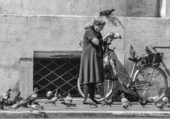 Pranzo! (MarcCooper_1950) Tags: street blackandwhite woman rome roma monochrome birds bicycle lady nikon feeding pigeons elderly pidgeons 5000 piazzanavona bianco nero 6000 birdlady autofocus feedingpidgeons 10000views 100faves 200faves 150faves 100comments streetlady d7100 250faves marccooper