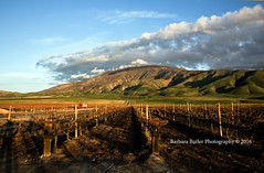 Green Hills (RedHatGal: Barbara Butler/FireCreek Photography) Tags: road ranch winter sunset clouds truck shadows bluesky bearmountain pasture greenhills grapevines hwy223 kerncounty redhatgal firecreekphotography barbarabutlerphotography
