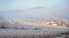 Niedermorschwihr (Philippe Haumesser Photographies) Tags: trees winter mist france cold tree fog forest landscape outside landscapes reflex nikon frost village hiver hill arbres vineyards alsace paysage vignes vignoble arbre froid paysages brouillard fort elsass brume colline givre wines 2016 niedermorschwihr d7000 nikond7000