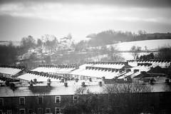DSC_0018 - All white in the Wood (SWJuk) Tags: uk winter england blackandwhite bw snow home monochrome nikon unitedkingdom britain outdoor lancashire gb towpath lightroom burnley 2016 terracedhouses 18300mm d7100 rawnef burnleywood swjuk nikond7100 jan2016