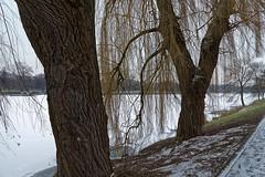 Ice Age - 001-0001_Web (berni.radke) Tags: schnee winter snow ice iceage eis mnster winterlandscape winterlandschaft aasee eiszeit