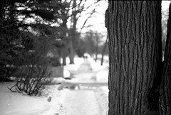 Out for a Walk (halimshah92) Tags: urban bw film nature olympus calm serenity walkabout ilford fp4 om1