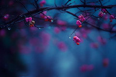(Slavin@) Tags: nature colors rain weather blossom bokeh drop
