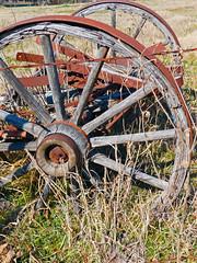 fairlie texas 2 (reluctant_paladin) Tags: county horse abandoned wheel rural wagon paint texas wheels hunt buckskin fairlie offthebeatenpathtexas