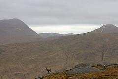 Monarch of the Glen (RoystonVasey) Tags: mountain canon eos scotland zoom m 1855mm stm loch corbett arkaig sgurr bheinn fraoch strathan mhurlagain