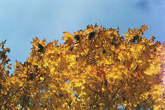 (bored now.) Tags: trees fall leaves canonae1program