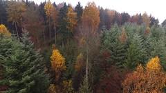 Dji048 Videoschnappschuss Herbstwald (ME 757) Tags: wald natuer