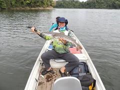 12417866_933893763366975_3944506860829191833_n (Nelson Lage - pescamazon.com.br) Tags: trip travel fish river fishing amazon bass peixe catfish xingu flyfishing casting tucunare pescaria amazonia peacockbass trombetas payara