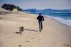 The Joy of Life (AstonJ) Tags: life boy beach king joy charles run brunch spaniel cavalier enoshima february shonan 2016