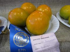 starr-091003-7543-Diospyros_kaki-Hachiya_fruit-Maui_County_Fair_Kahului-Maui (Starr Environmental) Tags: diospyroskaki