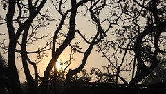 Sunshine Tree (RiddhoRaju) Tags: morning travel friends buddy journey wintermorning jessore jessorerailwaystation jessorebangladesh jessorekhulnabangladesh jessorecity wwwriddhorajucom httpriddhorajucom