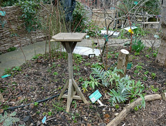 RISC roof garden, March 2016 (3) (karenblakeman) Tags: uk reading march permaculture roofgarden londonstreet 2016 risc forestgarden globalcafe