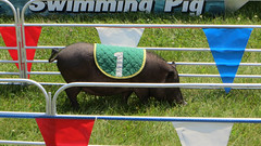 1 (timp37) Tags: county summer sign race 1 pig july indiana fair number porter swifty 2015